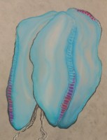 "Comb Jelly - Pastel on Magnani Pescia Paper 30"" x 22"""