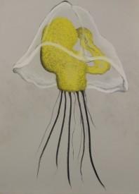 "Owenia Collaris Mitraria Larva - Pastel on Magnani Pescia Paper 30"" x 22"""